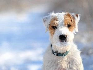146909521-cold-weather-pet-arthritis-632x475