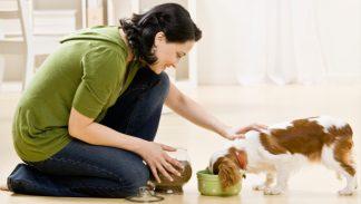 cropped-woman-feeding-dog-food.jpg