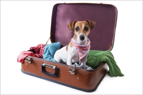 dog-in-suitcase-pic