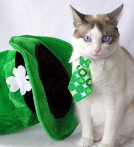 awesome-pets-dressed-up-ready-for-irish-parade-16