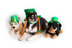 cute-st-patrick-s-day-dog-29040702