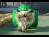 st-pattys-cat2