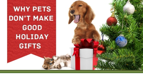 why dogs or cats are not good gifts creation s care pet sitting llc